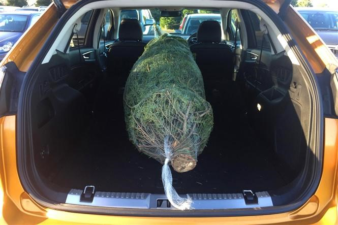 Ford Edge Easily Swallows An Eight Foot Christmas Tree