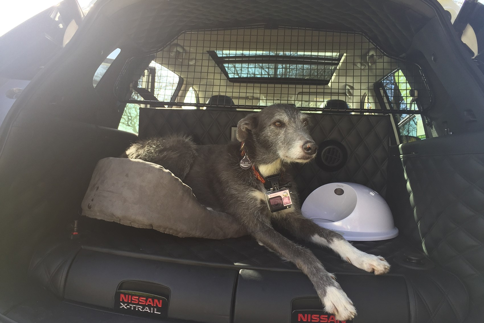 nissan x-trail 4dogs - the most dog-friendly car ever?   parkers